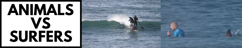 WHEN ANIMALS ATTACK SURFERS