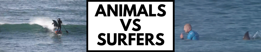 When Animals Attack Surfers.